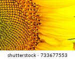 Sunflower Texture And...