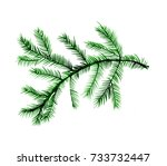 fir tree branch  illustration ... | Shutterstock . vector #733732447