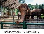 Elephants In Zoo.