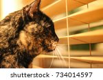 A Pet Tortoiseshell Cat Looks...
