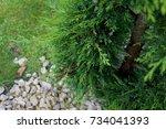 Small photo of Bush in the dooryard