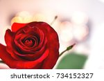 Background Bud Of Red Rose  ...