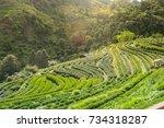 2000 tea farm at doi angkhang... | Shutterstock . vector #734318287