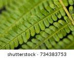 Close Up Of A Green Bracken Or...