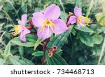 pink flower | Shutterstock . vector #734468713