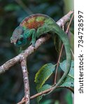 chameleon on a branch | Shutterstock . vector #734728597