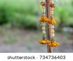 marigold steering wheel | Shutterstock . vector #734736403