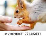 Person Feeds The Squirrel. A...