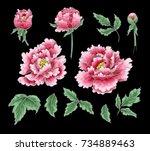 set of elements of peony flower ... | Shutterstock .eps vector #734889463