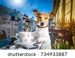 jack russell dog having a... | Shutterstock . vector #734933887