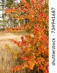 beautiful autumn background... | Shutterstock . vector #734941687
