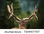 mature red deer stag with big... | Shutterstock . vector #734947747