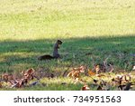 squirrel holding an acorn in it ... | Shutterstock . vector #734951563
