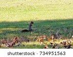 squirrel holding an acorn in it ... | Shutterstock . vector #734951563