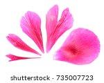 pink petals of peony close up...   Shutterstock . vector #735007723