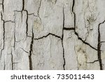 white rough withered tree... | Shutterstock . vector #735011443