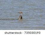 Small photo of Osprey Eating a Fish in the Laguna Atascosa Wildlife Refuge in Texas