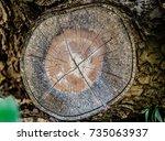 Small photo of Tree stump of Baphia racemosa or Camwood.