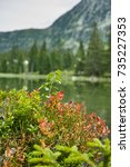 Small photo of Small forest lake in Alpen mountains, place for walking, relaxation and tranquil vacation