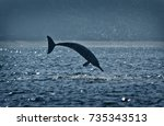 jumping free dolphin | Shutterstock . vector #735343513