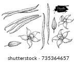 vanilla flower and bean stick... | Shutterstock .eps vector #735364657