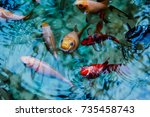 fish with an artificial pond | Shutterstock . vector #735458743