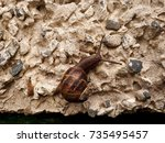 Small photo of Snail on Pebble Dashed Wall