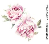 watercolor pink peonies... | Shutterstock . vector #735496963