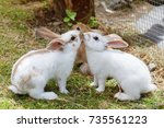 three baby rabbits is eating... | Shutterstock . vector #735561223