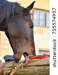crib biting horse   animal...   Shutterstock . vector #735574957