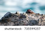 red crab from tenerife | Shutterstock . vector #735599257