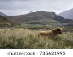 highland cattle | Shutterstock . vector #735631993