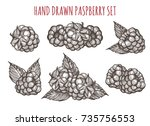 hand drawn raspberry vector... | Shutterstock .eps vector #735756553