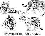 set of vector drawings on the... | Shutterstock .eps vector #735775237