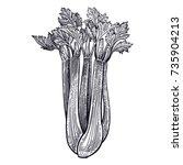 celery. plant isolated.... | Shutterstock .eps vector #735904213