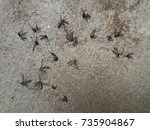 Small photo of Mosquitoes die on the floor.