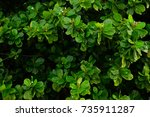 green leaf background. | Shutterstock . vector #735911287