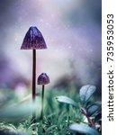 purple mysterious mushrooms in...   Shutterstock . vector #735953053