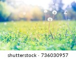 nature foliage meadow with... | Shutterstock . vector #736030957