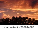 colorful sky with big tree in... | Shutterstock . vector #736046383