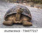 Giant Land Tortoise On The Roa...