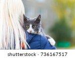 gray cat on the girl's shoulder | Shutterstock . vector #736167517