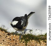 Small photo of Coal tit, (Parus ater) on a mossy,snowy,fugal stump