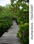 bridge in the woods | Shutterstock . vector #736252687
