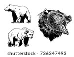 graphical set  of grizzly bear... | Shutterstock .eps vector #736347493