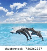 pack of jumping dolphins ...   Shutterstock . vector #736362337