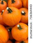orange pumpkins  autumn harvest   Shutterstock . vector #736364443