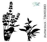 Set Of Sage. Flowers On Stems...