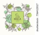 background with maca peruvian.... | Shutterstock .eps vector #736412017