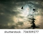Heron And Crow. A Great...